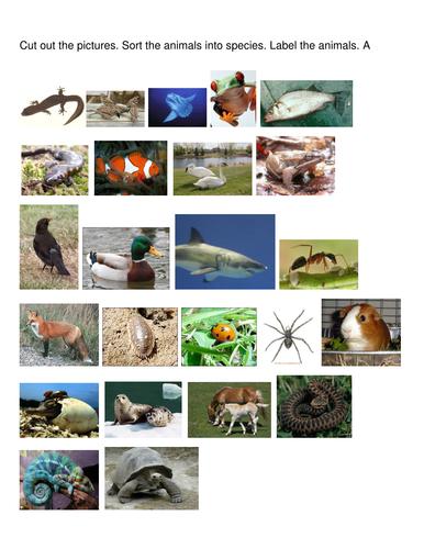 Sort animal groups