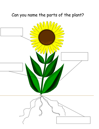 Image result for label parts of a plant ks1