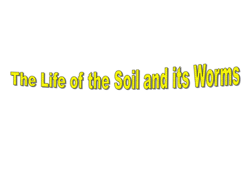 Explore the composition of the soil and worms