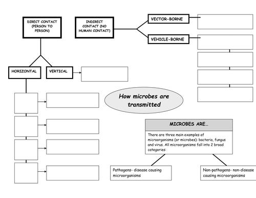 Microbes Mind Map (Graphic Organizer)