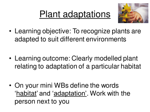 Worksheets Plant Adaptations Worksheets 5th Grade plant adaptations by smcdonnell1 teaching resources tes