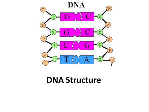 DNA Starting Activity