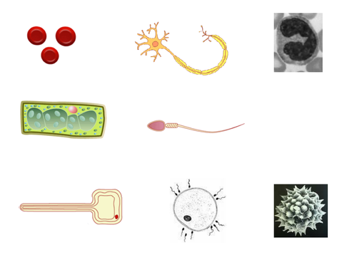 Cells resources