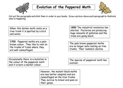 The peppered moth by TeachBiology Teaching Resources Tes – Natural Selection Worksheets