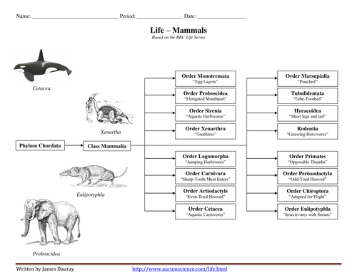 BBC Life - Mammals Worksheet and Classification Ch by jamesdauray - Teaching Resources - Tes
