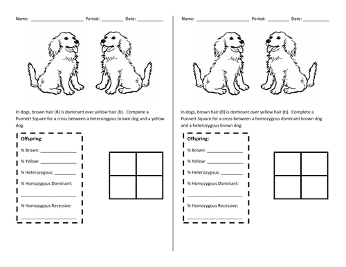 Punnett Square Warmup by chemistree Teaching Resources TES – Punnet Square Worksheet