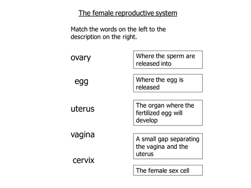 reproduction the female reproductive system by labsalom teaching resources tes