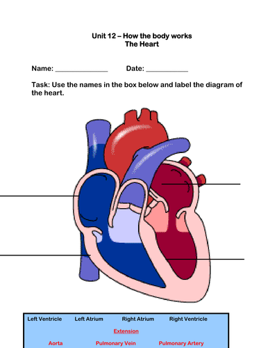 The Human Heart Worksheet by robbirdy84 - UK Teaching ...