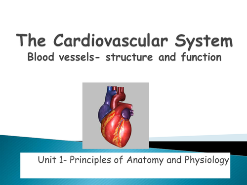 Cardiovascular system function by tracyserendipity - Teaching ...