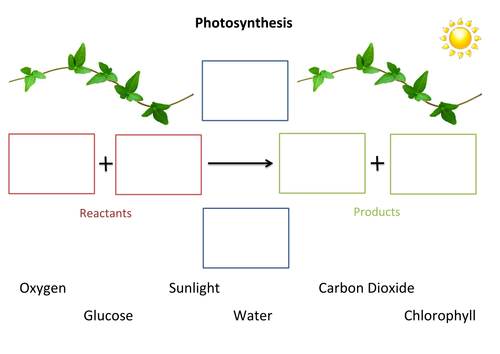 Photosynthesis Fill In The Gaps By Susiejay Teaching Resources Tes