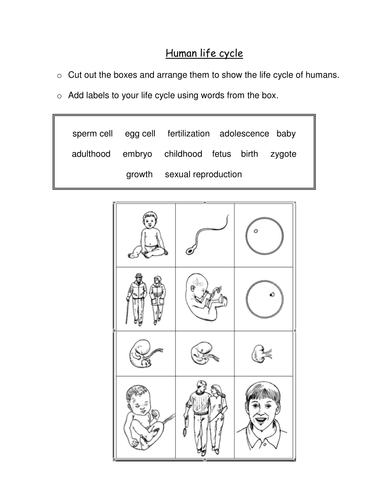 Human life cycle by sadscientist - Teaching Resources - TES