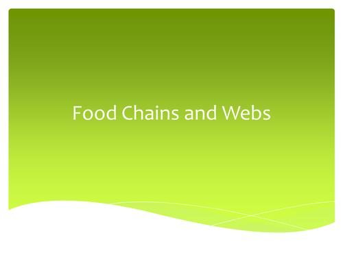 Food Web Investigation
