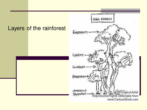 Rainforest layers by claire494 Teaching Resources TES – Layers of the Rainforest Worksheet