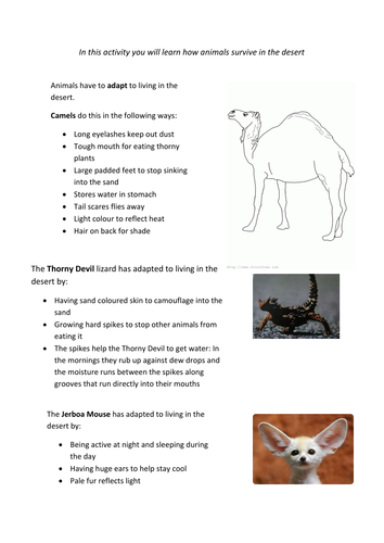 Hot Deserts Animals Adaptations By Sarah Colessmith Teaching