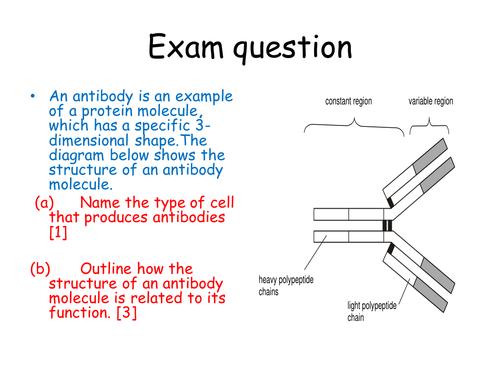 AQA Immunity lesson 3