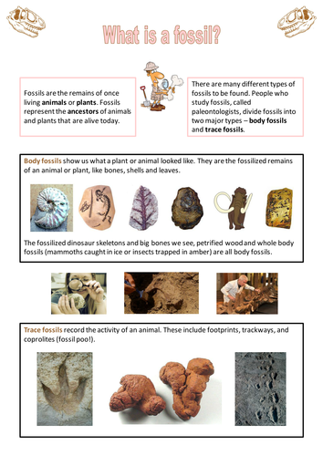 Fossils - factsheet by neanderthalchick - Teaching Resources - Tes