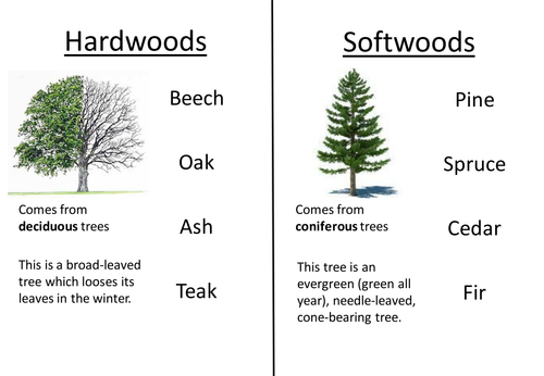 Hardwoods and softwoods starter plenary by misskhatkar