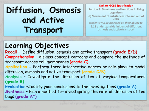 Diffusion Osmosis and Active Transport by freddyhillman – Active Transport Worksheet