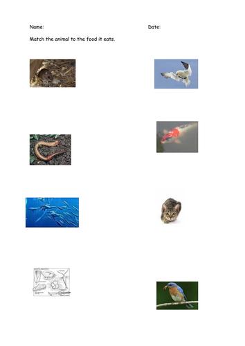 Predator Or Prey By Csnewin Teaching Resources Tes