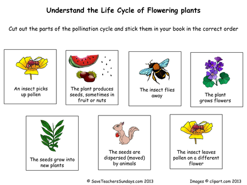 Plants Including Parts Of Growth And Seed Disper By