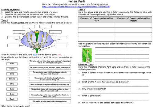 Web activity: Reproduction in flowering plants by cathb1975 ...