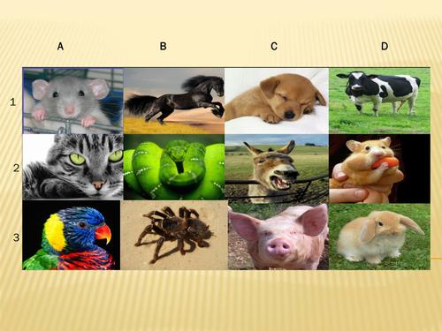 KS3 French - Animals