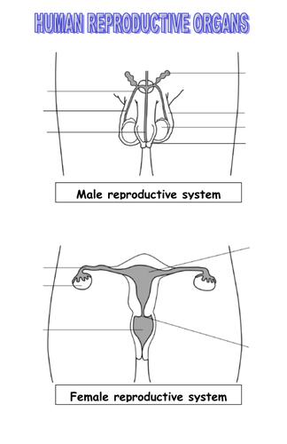 Reproductive Organ Function Factsheet Worksheet By