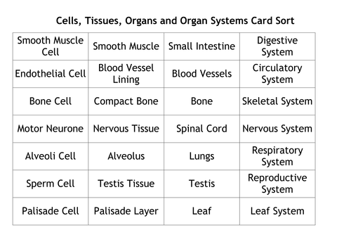 Cells Tissues Organs And Organ Systems Card Sort By Simonkain