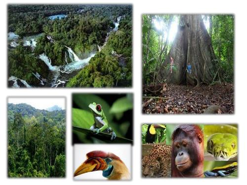 Yr 7 Rainforests