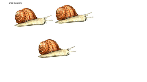 snail counting powerpoint